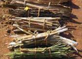 bamboo-three